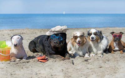 Recomendaciones para disfrutar con tu perro en la playa