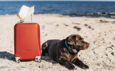 Consejos para disfrutar de tu mascota en verano